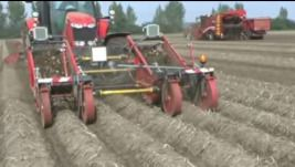 Harvesting 8 rows potatoes in once with the Tolmac MT-75 and Grimme Varitron 470
